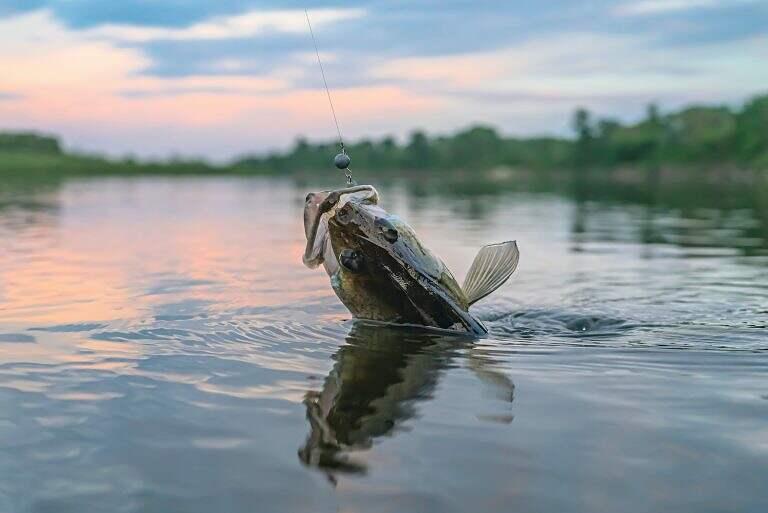 walleye catching live bait